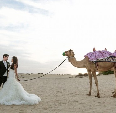 wedding camel