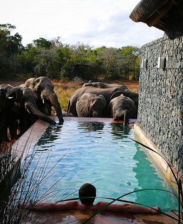 Partager le pool avec quelques Ellies