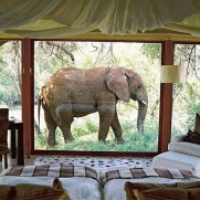 elephant in front of bedroom