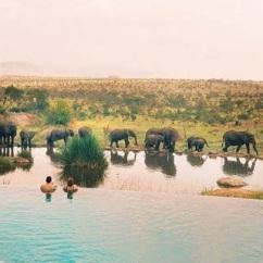 elephants and swimming pool