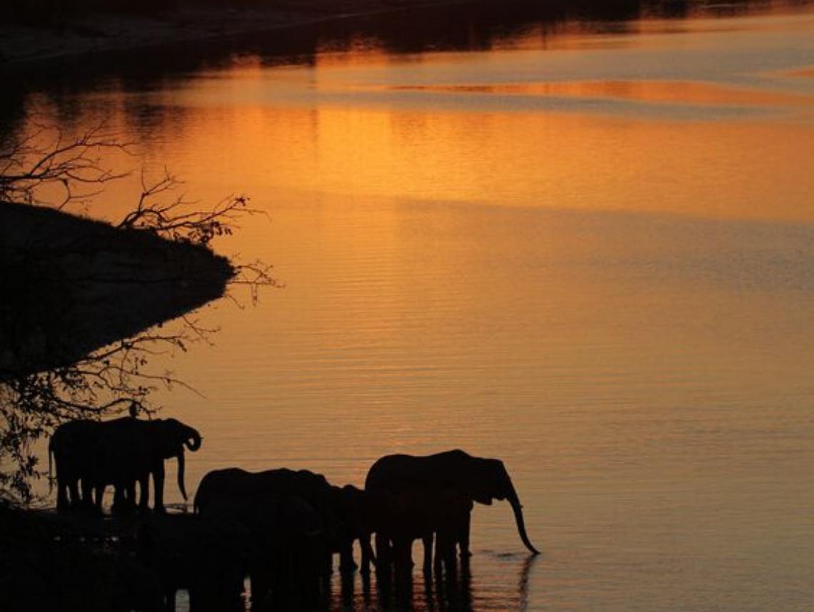 JJ pic sizes elephant sunset