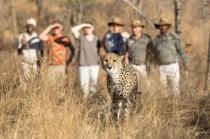 Safari Karongwe