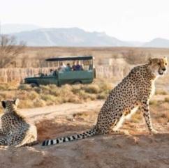 leoppards namibia