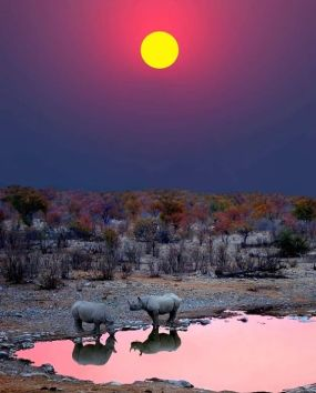 namibia rhino