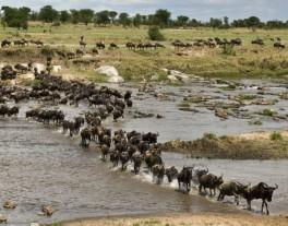africa_serengeti-wildebeest-migration