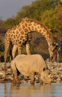 animals waterhole safari