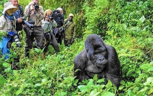 gorilla blog trekking