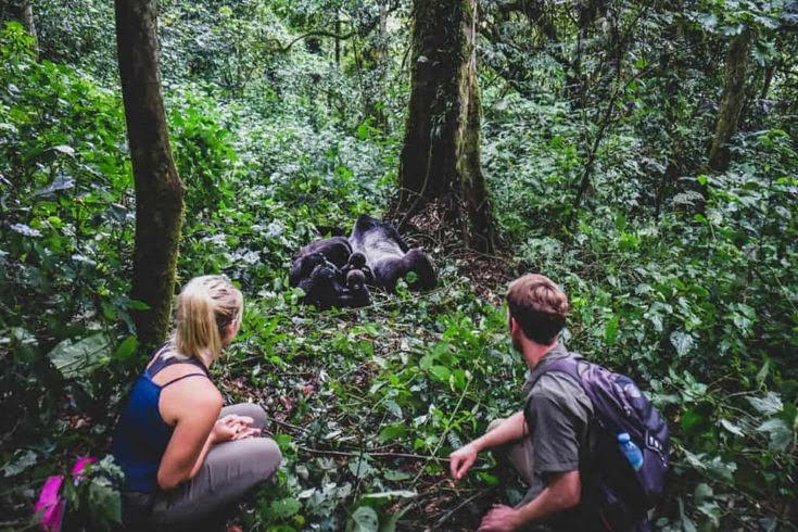 gorilla trekking blog