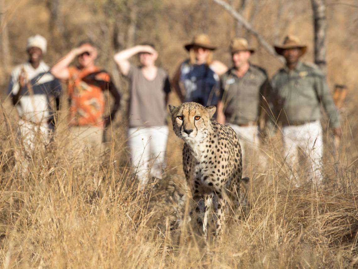 JJ pic sizes safari 8