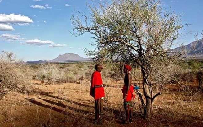 locals on safari